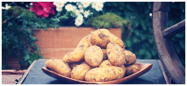 Kartoffelernte_1